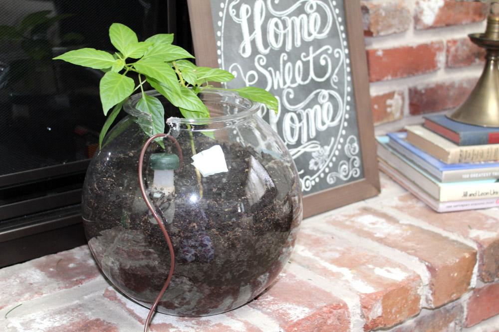 Creative Planters for Indoor Gardens