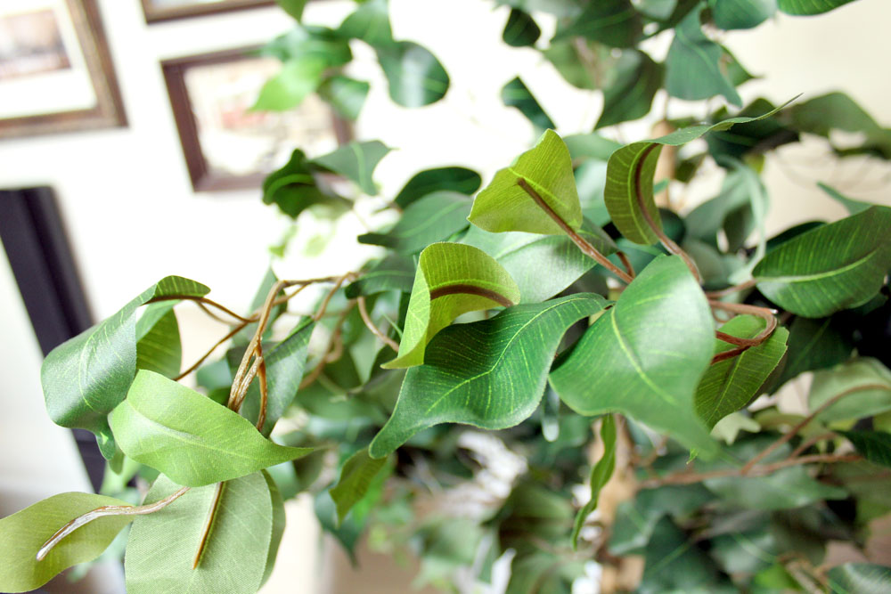 Add color to neutral rooms with plants and greenery