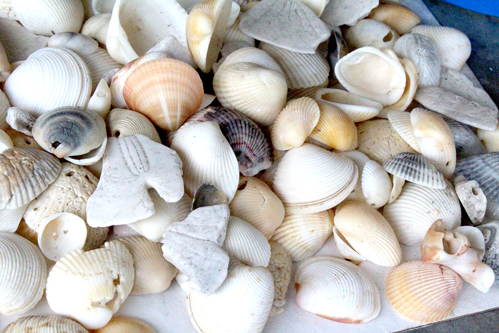 Using seashells collected from the beach to make DIY beach wall art